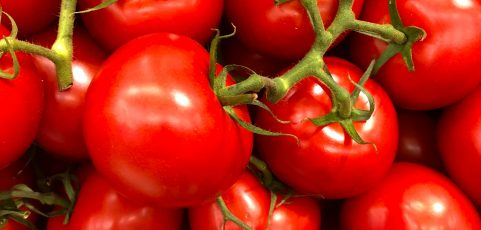 IP Rights, R&D Contracts and Tomatoes?